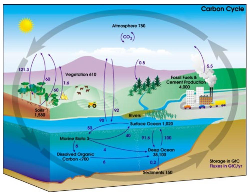 nasa_carbon_cycle_2008-1